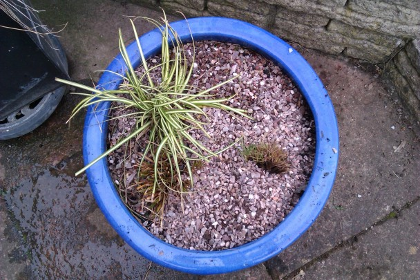 pot with grasses in