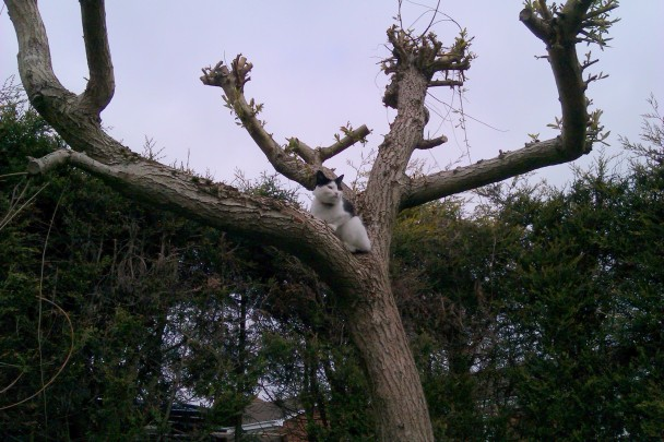 cat up tree